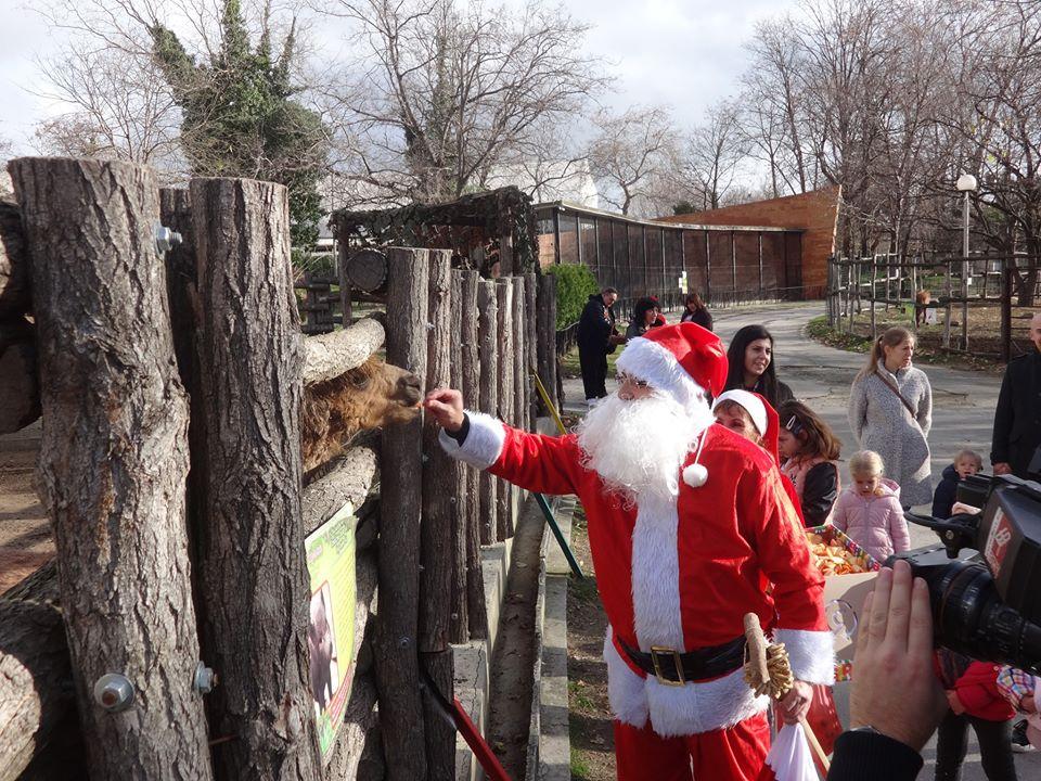 Снимки: Дядо Коледа във Варненския Зоопарк
