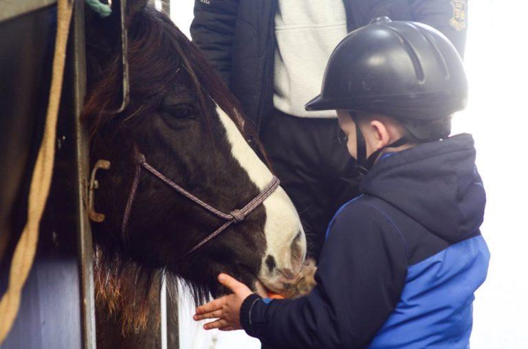 Нека помогнем: Събират пари за закупуването на терапевтичен кон