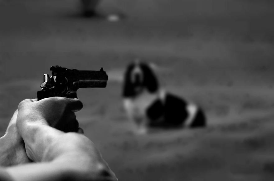 Задържаха мъж от с. Попович, прострелял куче в двора на къща в с. Градинарово