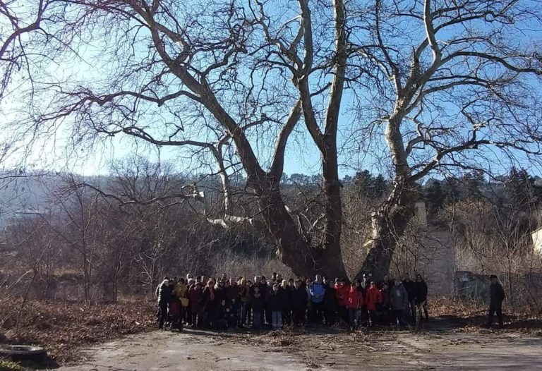 Варненци притеснени за вековно дърво заради строеж на голям супермеркет до него