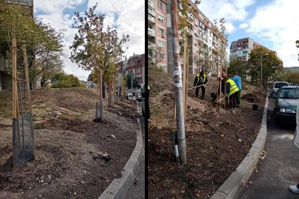 Засадиха 60 дръвчета във Възраждане 4
