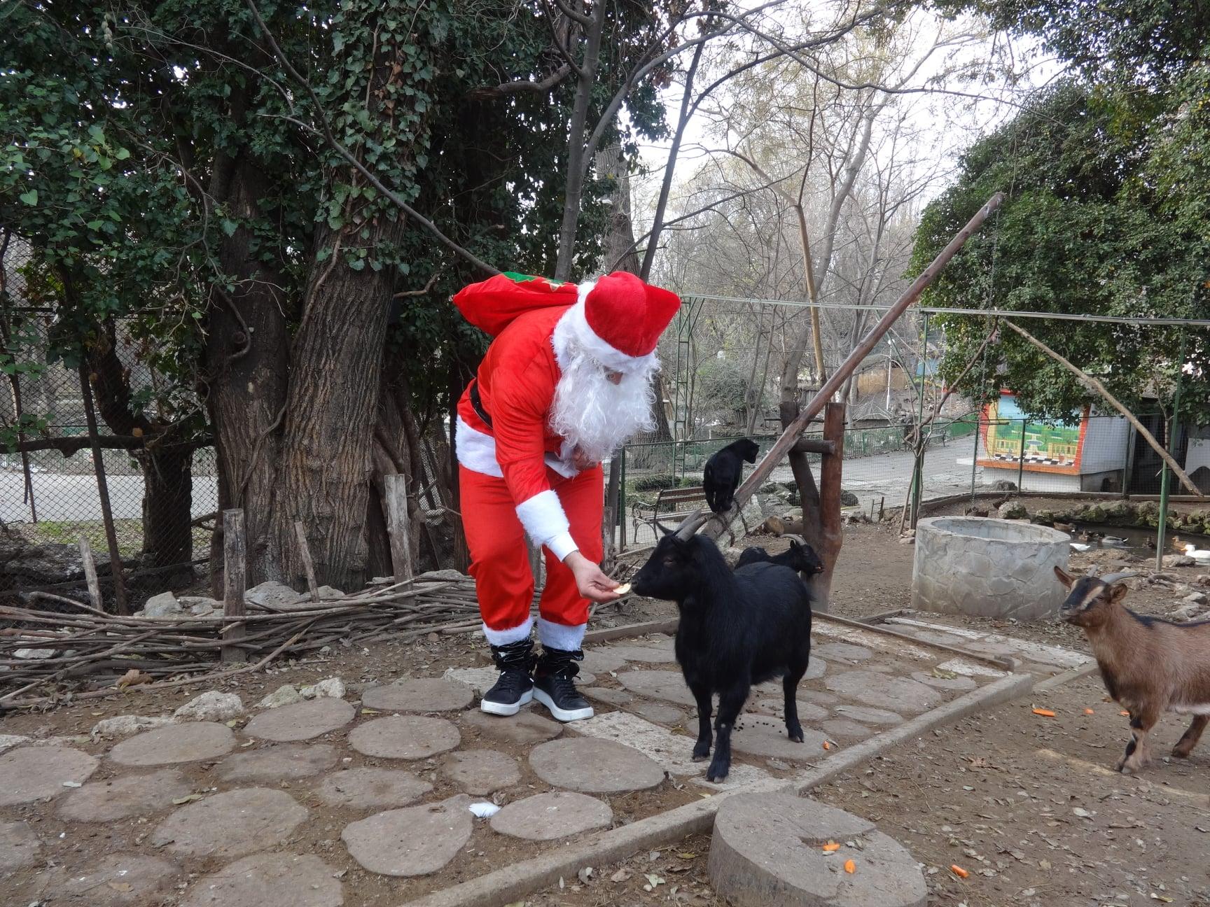 Снимки: Дядо Коледа зарадва животните във варненския Зоопарк