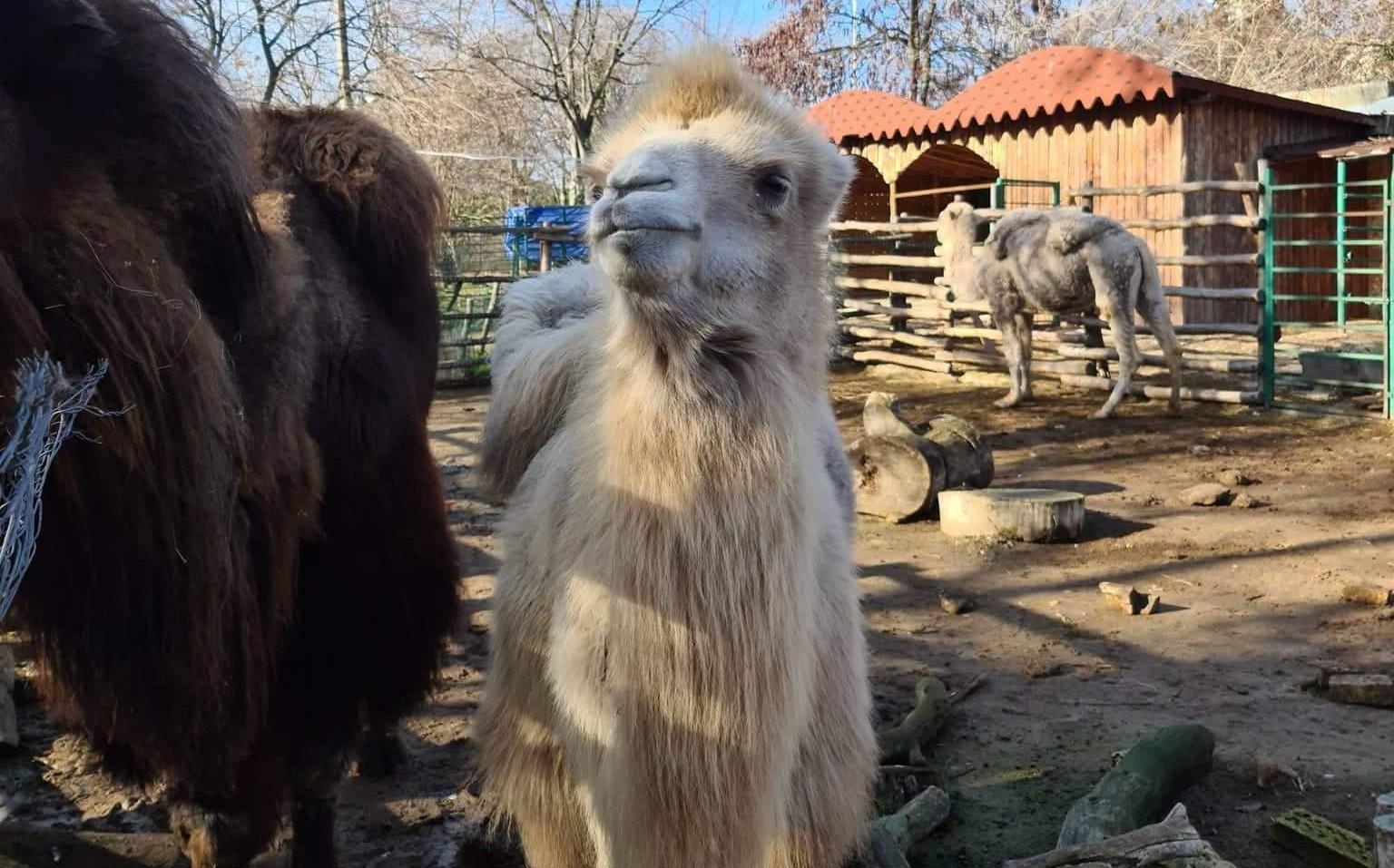 Във Варненския зоопарк също си имат именик
