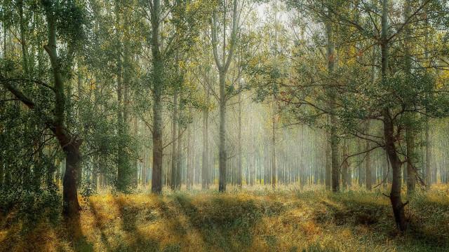 """ПП """"Републиканци за България"""" настоява за спешни реформи в горския сектор"""