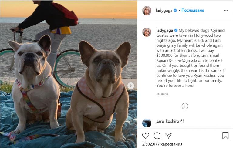 Върнаха откраднатите кучета на Лейди Гага