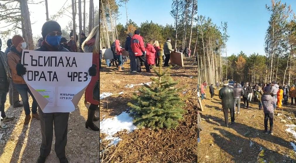 Варненци протестираха срещу изсичането на борова гора