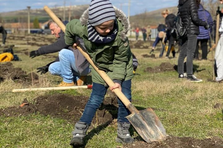 Засадиха 2000 дръвчета в района на Девня
