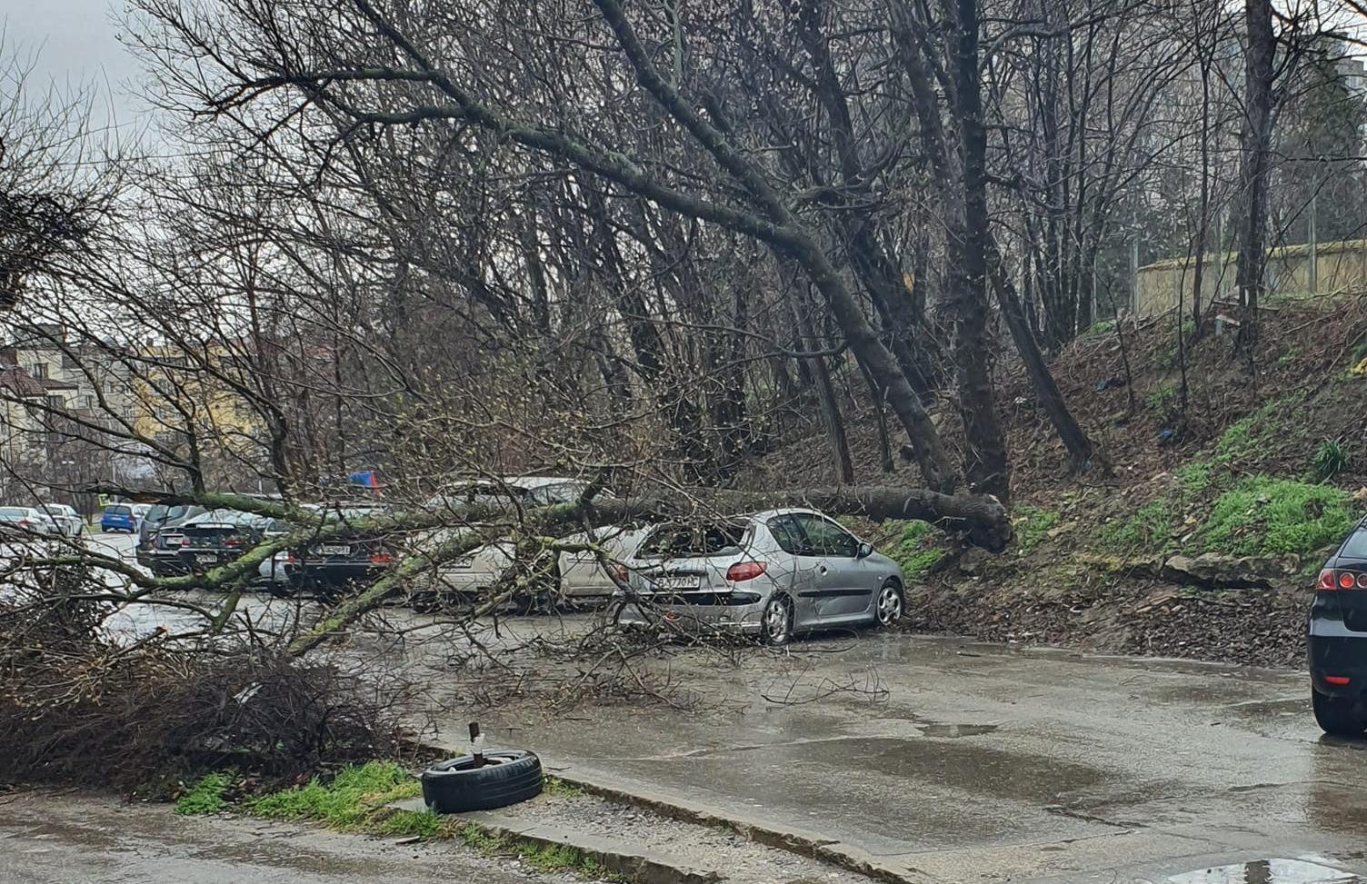 """Дърво падна върху кола на улица """"Кестен"""""""