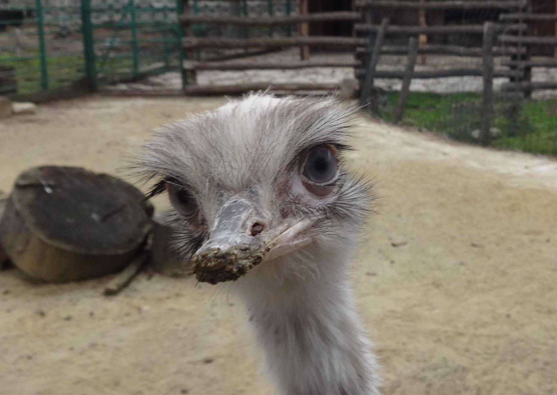 Снимки: Зоопарк – Варна показа най-новия си обитател