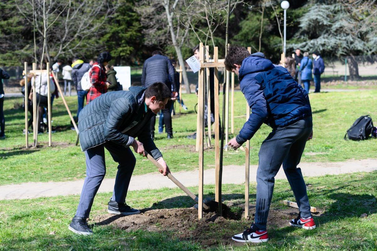 """Засадиха 50 дръвчета по случай 50 години МГ """"Д-р Петър Берон"""""""