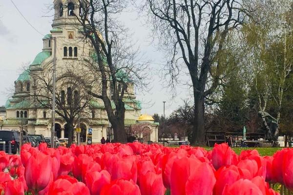Разцъфнаха лалета в паркове и градини на София
