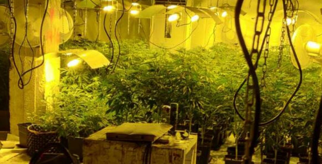 Разкрита е наркооранжерия в сградата на бившия стъкларски завод в гр. Перник