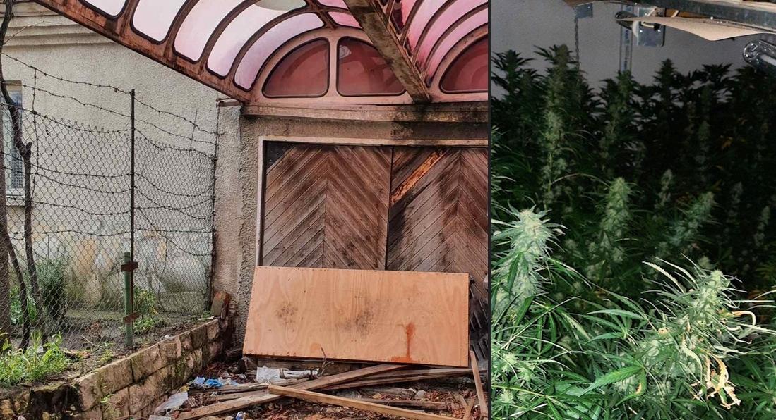 Оранжерия за отглеждане на марихуана е разкрита в гараж във Варна