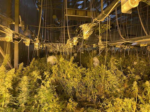 Служители на СДВР разкриха оранжерия за отглеждане на марихуана